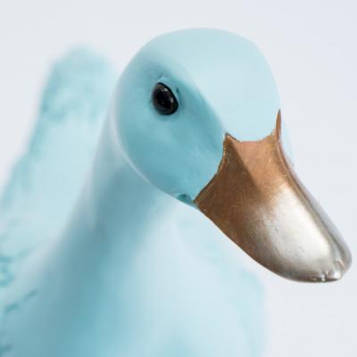 Blue Duck Head